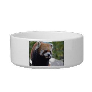 Sweet Red Panda Bear Bowl