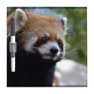 Sweet Red Panda Bear Dry-Erase Board