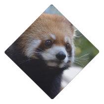 Sweet Red Panda Bear Graduation Cap Topper
