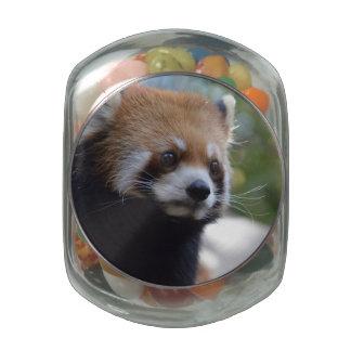 Sweet Red Panda Bear Jelly Belly Candy Jar