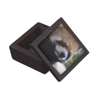 Sweet Red Panda Bear Keepsake Box
