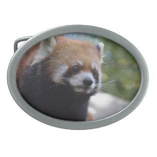 Sweet Red Panda Bear Oval Belt Buckle