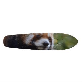 Sweet Red Panda Bear Skateboard