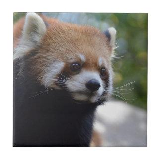 Sweet Red Panda Bear Tile