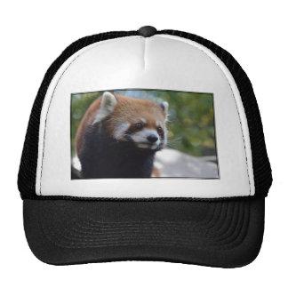 Sweet Red Panda Bear Trucker Hat