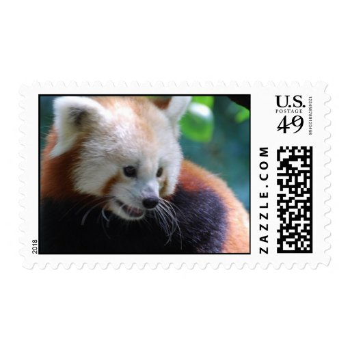 Sweet Red Panda Postage