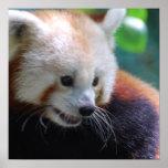 Sweet Red Panda Print