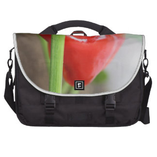 Sweet Red Pepper Computer Bag