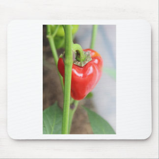Sweet Red Pepper Mouse Pad
