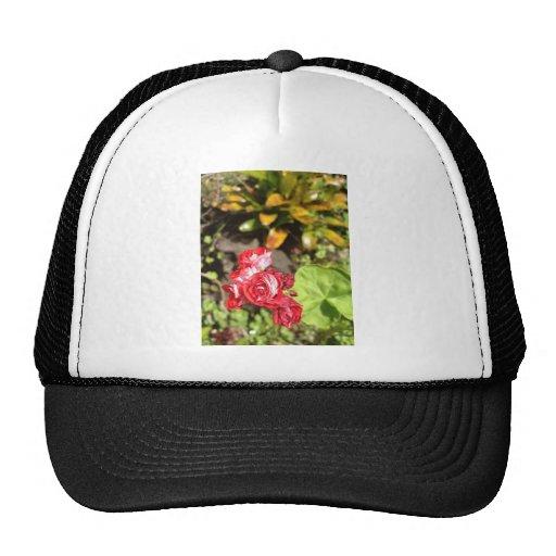 Sweet Red Roses Trucker Hat