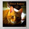 Sweet Repose Elegant Cat Photo Posters