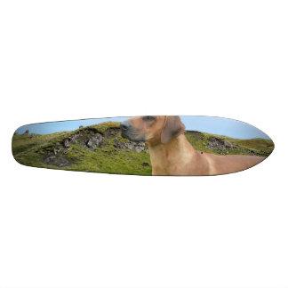 Sweet Rhodesian Ridgeback Dog Custom Skateboard