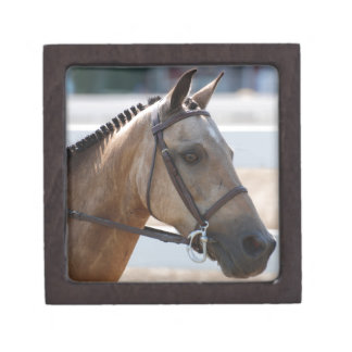 Sweet Roan Pony Gift Box