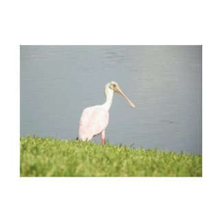 SWEET ROSEATE SPOONBILL Canvas Print