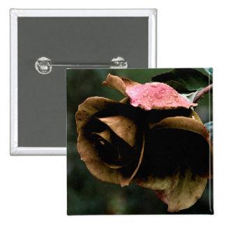 """Sweet Roses""- Patty Rose Pinback Button"