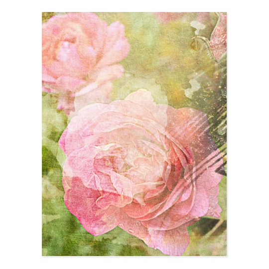 Sweet Roses Postcard