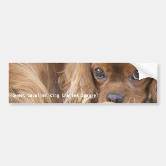 Sweet Ruby Cavalier King Charles Spaniel Bumper Sticker