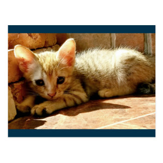 Sweet Sad Kitten Postcard