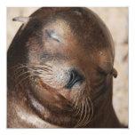 Sweet Sea Lion Invitations