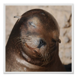 Sweet Sea Lion Poster