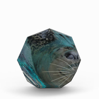 Sweet Seal Acrylic Award