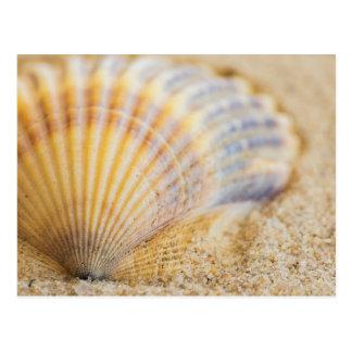 Sweet Seashell Postcard