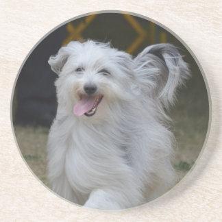 Sweet Sheepdog Coaster