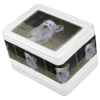 Sweet Sheepdog Cooler
