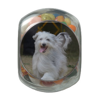 Sweet Sheepdog Glass Jars