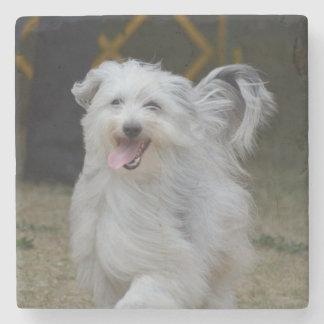 Sweet Sheepdog Stone Coaster