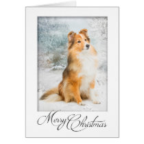 Sweet Sheltie Christmas Card