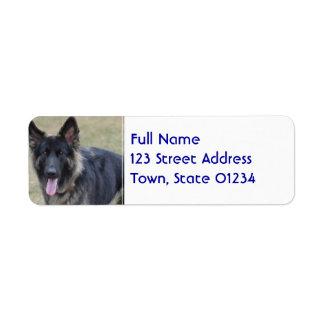 Sweet Shiloh Shepherd Label