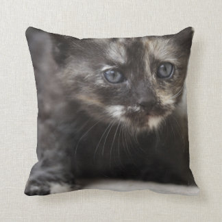Sweet Shy Tortoiseshell Baby Throw Pillow