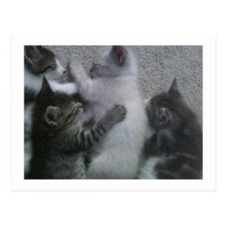 Sweet Sleeping KITTAYS_FOUR Postcard
