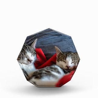 Sweet sleeping Kitties Acrylic Award