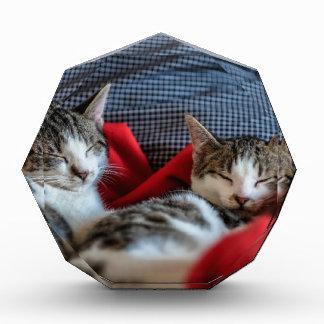 Sweet sleeping Kitties Award