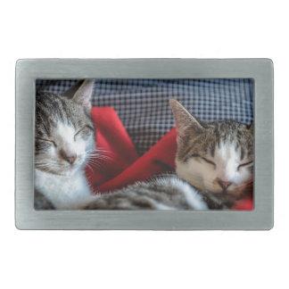 Sweet sleeping Kitties Rectangular Belt Buckle