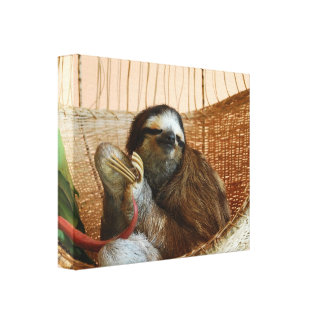 Sweet Sloth Gallery Wrapped Canvas