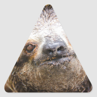 Sweet Sloth Triangle Sticker