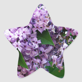 Sweet Smells Star Stickers