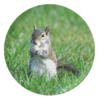 Sweet Snacking Squirrel Melamine Plate