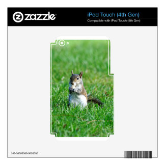 Sweet Snacking Squirrel Skins For iPod Touch 4G