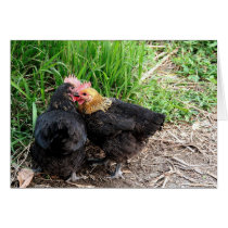 Sweet Snuggling Chickens Photography Custom Card