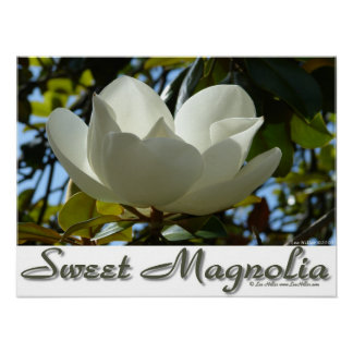Sweet Southern Magnolia Poster