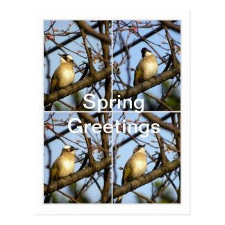 Sweet Spring Messenger/Bird on Cherry Branches Postcard