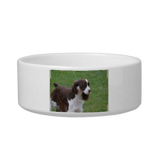 Sweet Springer Spaniel Pet Food Bowls