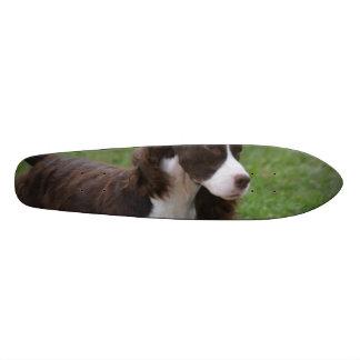 Sweet Springer Spaniel Skate Board Decks