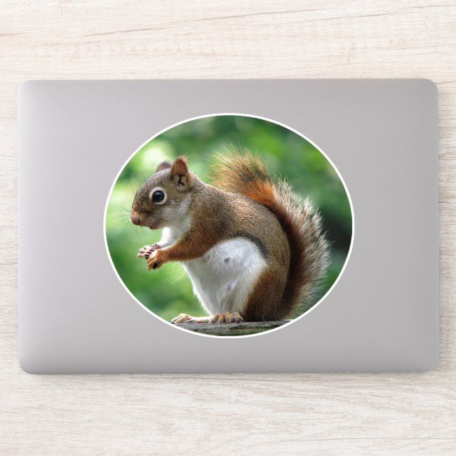 Sweet Squirrel Animal Contour Sticker