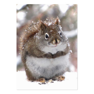 Sweet Squirrel ATC Business Cards