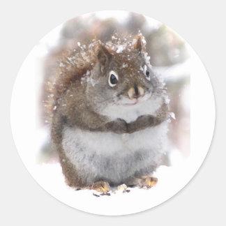 Sweet Squirrel Classic Round Sticker